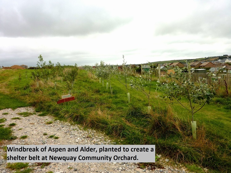 Case Study - Newquay Community Orchard