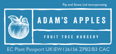 Apple Trees and Fruit Trees For Sale. Wholesale and retail.